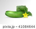 ベジタブル 野菜 きゅうりのイラスト 41084644
