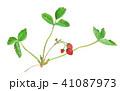 strawberry 41087973