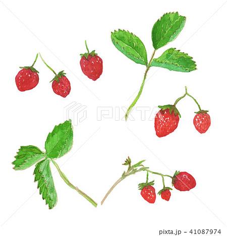 strawberry&leaf 41087974