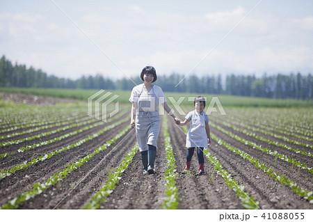 畑作業をする親子 41088055