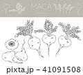 マカの線画(アナログ) 41091508