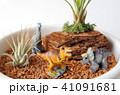 恐竜のジオラマ 41091681