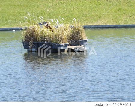 習志野市サクラ広場のカルガモ池の巣箱 41097613