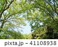 初夏 植物 樹木の写真 41108938