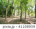 初夏 植物 樹木の写真 41108939