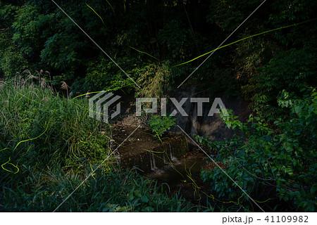 初夏のホタル 鈴鹿ホタルの里 ゲンジボタル 41109982