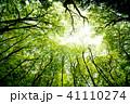 森林 森 木々の写真 41110274