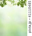 背景 新緑 バックグラウンドのイラスト 41110485