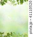背景 新緑 バックグラウンドのイラスト 41110520
