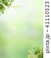 背景 新緑 バックグラウンドのイラスト 41110523