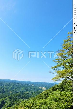 初夏の青空と新緑の風景 41111195