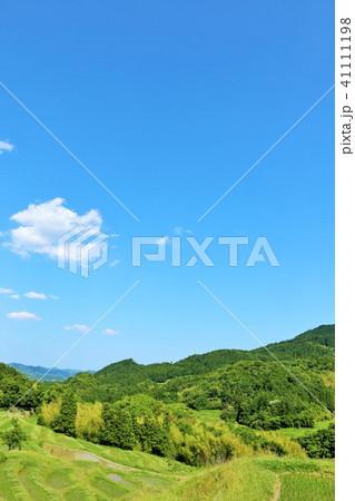 千葉県 初夏の青空と新緑の大山千枚田 41111198