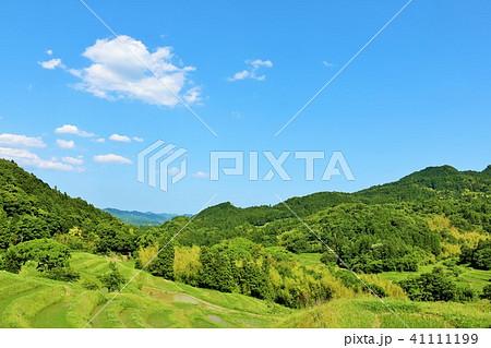 千葉県 初夏の青空と新緑の大山千枚田 41111199