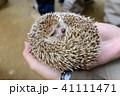 動物園 41111471