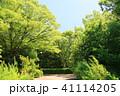 初夏 植物 樹木の写真 41114205