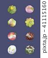 和菓子 練り切り 水彩のイラスト 41115160