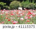 植物 花畑 花の写真 41115375