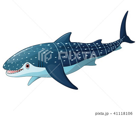 Illustration of whaleshark 41118106