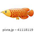 あろわな サカナ 魚のイラスト 41118119