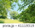 初夏 新緑 公園の写真 41119319