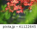 秋 紅葉 もみじの写真 41122645