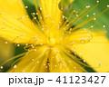 自然の美 花も道化のように 41123427