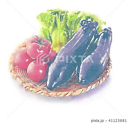 大和野菜 水彩画風 41123681