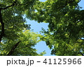 新緑 葉 初夏の写真 41125966