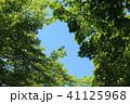 新緑 葉 初夏の写真 41125968