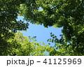 新緑 葉 初夏の写真 41125969