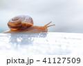 雨水とカタツムリ 梅雨イメージ 41127509
