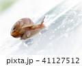 雨水とカタツムリ 梅雨イメージ 41127512