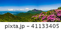 満開のミヤマキリシマと新緑 霧島の山 41133405