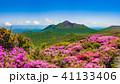 満開のミヤマキリシマと新緑 霧島の山 41133406
