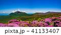 満開のミヤマキリシマと新緑 霧島の山 41133407