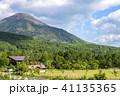 初夏 白樺高原 新緑の写真 41135365