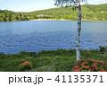 風景 白樺 ツツジの写真 41135371