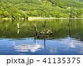 風景 枯れ木 女神湖の写真 41135375