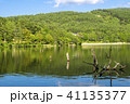 風景 枯れ木 女神湖の写真 41135377