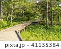 風景 遊歩道 木道の写真 41135384
