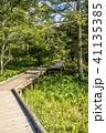 風景 遊歩道 木道の写真 41135385
