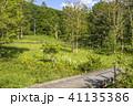風景 遊歩道 木道の写真 41135386