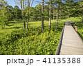 風景 遊歩道 木道の写真 41135388