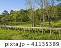 風景 遊歩道 木道の写真 41135389
