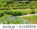 滝谷花菖蒲園 紫陽花 花の写真 41140936