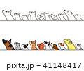 横を向いて見上げる犬と猫たちのボーダーセット 41148417