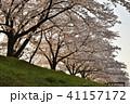 桜 春 花の写真 41157172