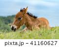 馬 動物 野生の写真 41160627