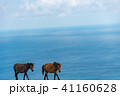 馬 動物 野生の写真 41160628