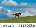 馬 野生 野生馬の写真 41160630